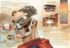 metahuman anatomy2.jpg