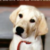 Marley And Me Vandals Spoil Flick