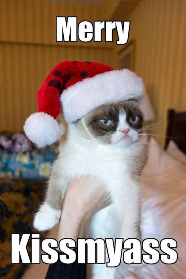 Christmas Grumpy Cat Memes Funny