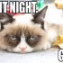 grumpy_cat_christmas_10.jpg