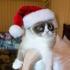 grumpy_cat_christmas_11.jpg