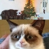 grumpy_cat_christmas_12.jpg