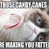 grumpy_cat_christmas_6.jpg