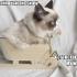 grumpy_cat_christmas_8.jpg