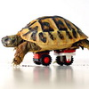 Blade The Turtle Walks Again With New LEGO Wheels