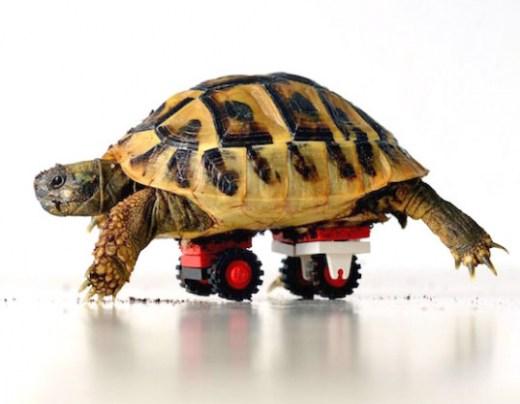 blade-tortoise-lego-wheelchair-537x417.jpg