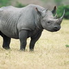 Want to Buy Some Rhino Horn? It's Legal in South Africa Again…