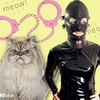 New Study Shows Cat Owners More Likely Into BDSM