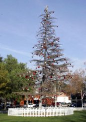 concord-charlie-brown-xmas-tree.jpg