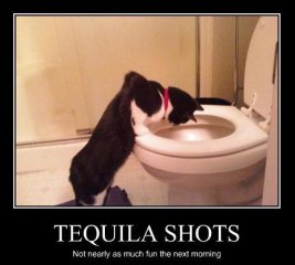 cat-puke.jpg