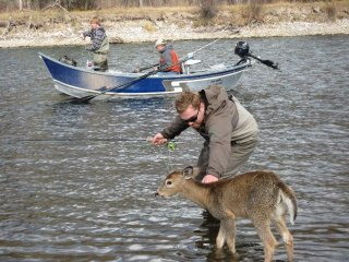fisherman_meets_deer_2.jpg