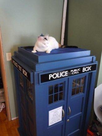 cat-tardis-1.jpg