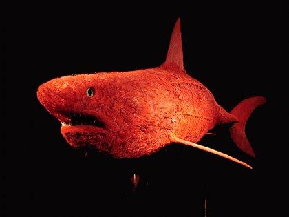 Shark-010.jpg