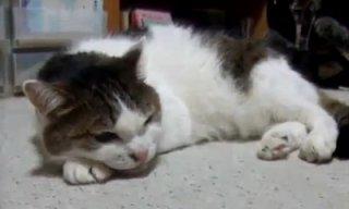 kitty_cat_sings_the_blues_feat.jpg