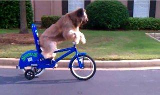 dog_rides_bike_feat.jpg