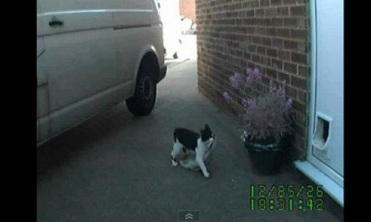 cat_burglar_feat.jpg