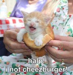cheezburger.jpg