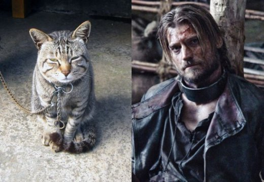 game-of-cats-4.jpg