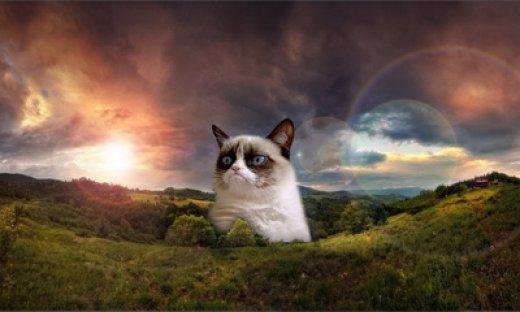 Grumpy-Cat-feat.jpg