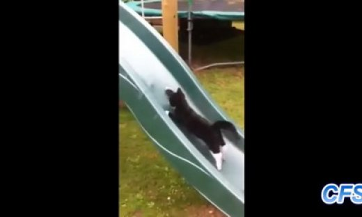 cats on slides_feat.jpg