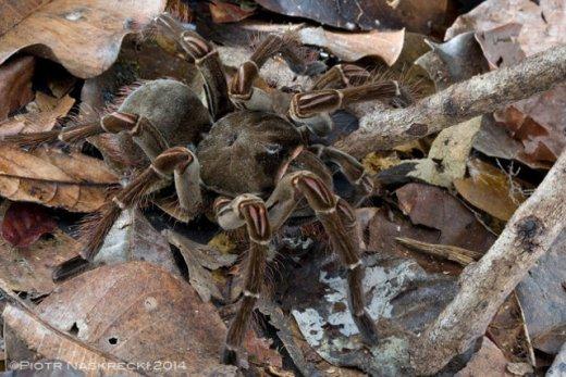giant-spider-2.jpg