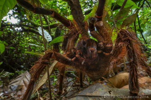 giant-spider-3.jpg