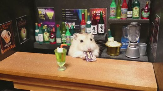 hamster-bartender-2.jpg