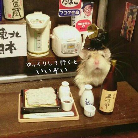 hamster-bartender-3.jpg