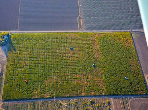 Worlds-Largest-Corn-Maze-Police-Calls.jpg