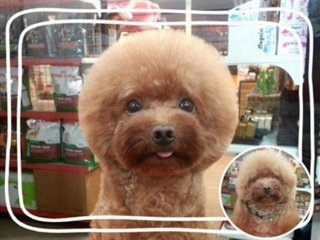 dog-grooming-shapes-3.jpg