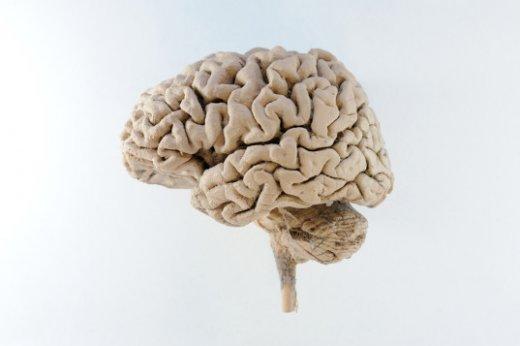 human-brain-537x357.jpg
