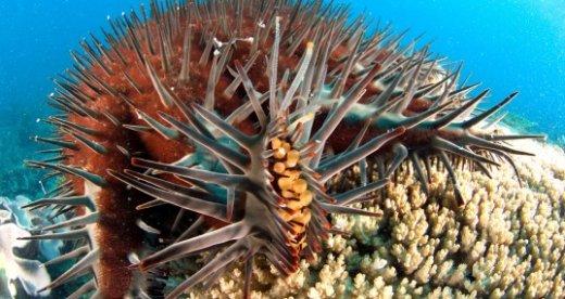 starfish-537x286.jpg