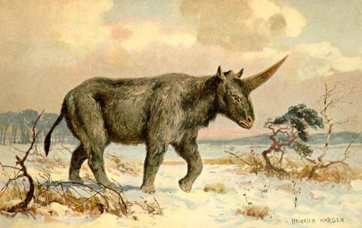 Elasmotherium1_feat.jpg