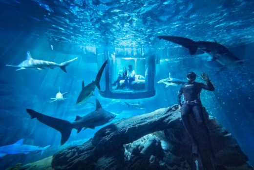 Airbnb-shark-tank-aquarium-contest-889x595.jpg