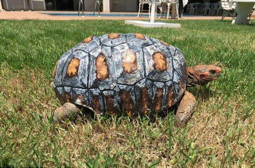3d-printed-tortoise-shell-1.jpg