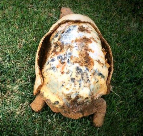 3d-printed-tortoise-shell-2.jpg