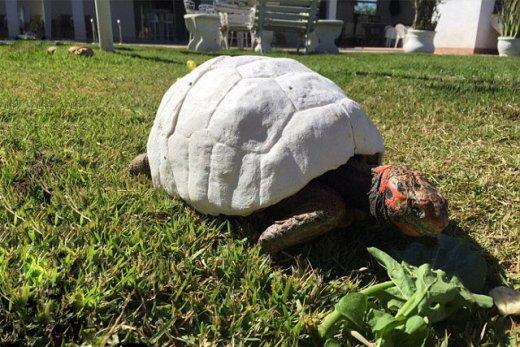 3d-printed-tortoise-shell-3.jpg