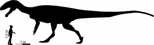Dinosaur-Size-889x264.jpg