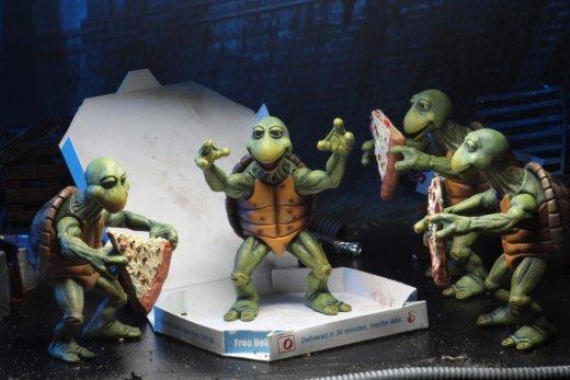 54064-Baby-Turtles4-1024x683.jpg