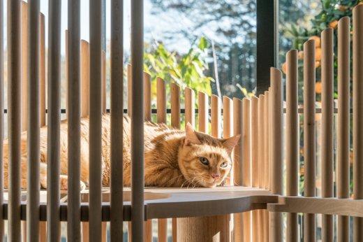 neko-cat-tree-5.jpg