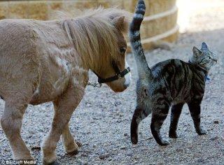 koda_dwarf_pony-2.jpg