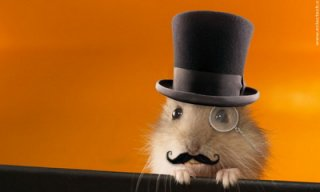 hamster_feat.jpg