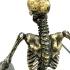 gohero_skeleton_4.jpg