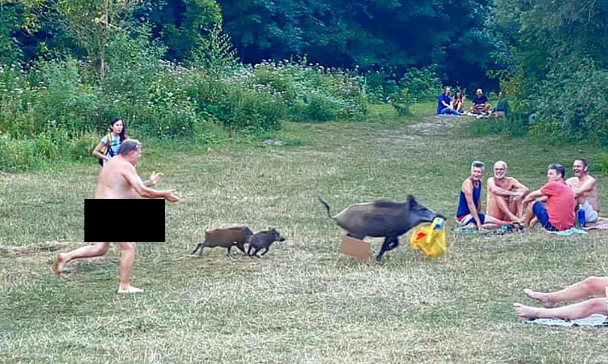 German nudist chases laptop-stealing wild boar in Berlin